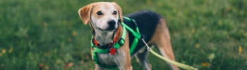 Lernpfote; Hundespaziergang