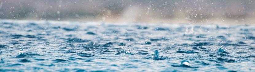 Lernpfote; Wasser überlebenswichtig