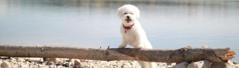 Lernpfote; Glücklicher Hund Lösung 3.