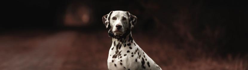 Lernpfote; Glücklicher Hund Lösung 1.