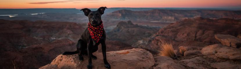 Lernpfote; Glücklicher Hund - wie geht das?