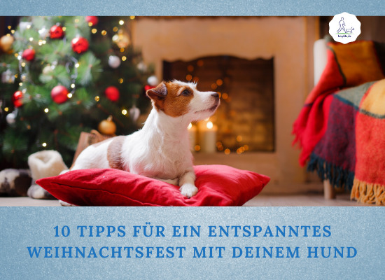 Lernpfote e.V. Podcast-Folge 056: 10 Tipps für ein entspanntes Weihnachten mit Hund