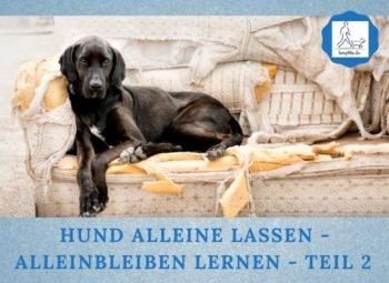 Lernpfote e. V. Podcast-Folge 062 Hund alleine lassen - Alleinbleiben lernen - Teil 2