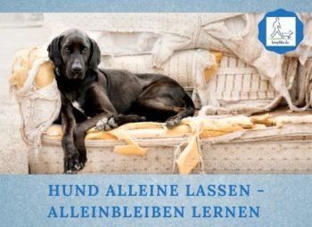 Lernpfote e. V. Podcast-Folge 061 Hund alleine lassen - Alleinbleiben lernen
