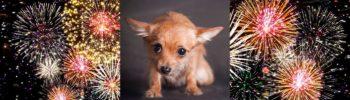 Lernpfote e.V. Blogbeitrag: 10 Tipps gegen Silvester-Stress beim Hund