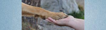 Blogbeitrag: Mythen im Zusammenleben mit dem Hund