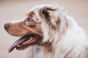 """Lernpfote e. V. """"Erste Hilfe am Hund"""" - Hecheln"""