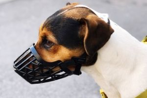 "Lernpfote e. V. ""Erste Hilfe am Hund"" - Maulkorbverwendung"