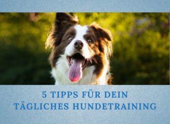 5 Tipps für dein tägliches Hundetraining zu Hause