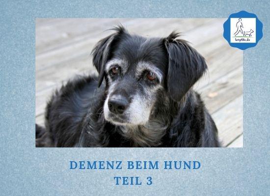 Lernpfote e. V. Podcast-Folge 070 Demenz beim Hund - Teil 3