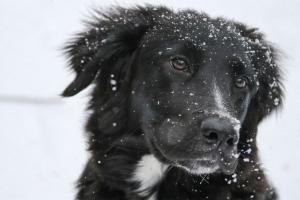Hundepfoten-Pflege im Winter