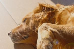 Lernpfote; Übermäßiges Bellen beim Hund