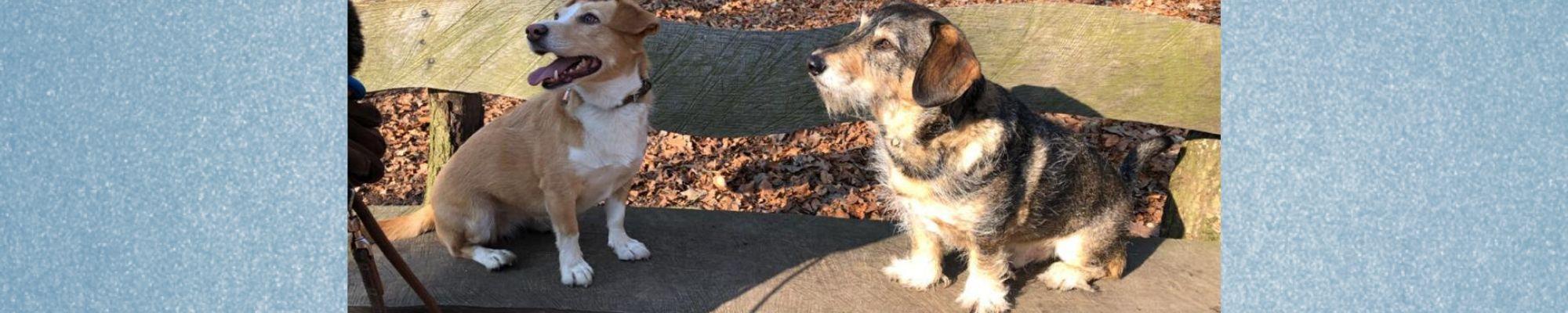 Testimonial zum Hundetraining