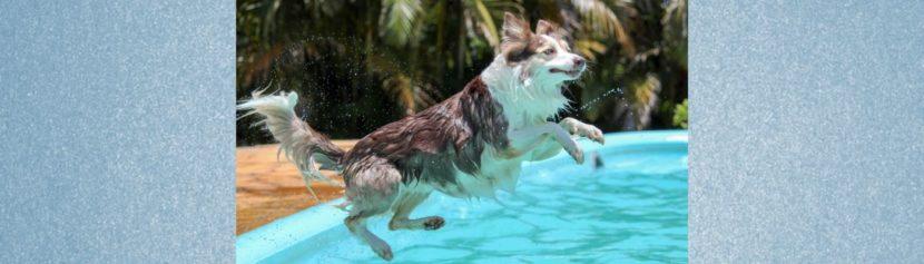 Blogbeitrag: Schwimmen mit Hund