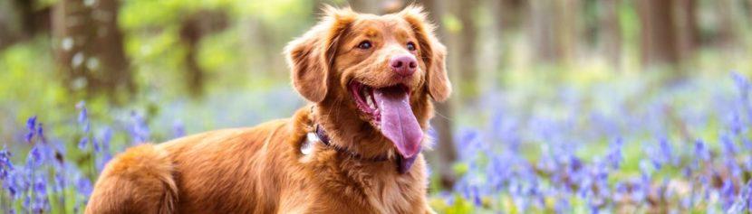 Lernpfote e.V. Blogbeitrag: Schwitzen beim Hund