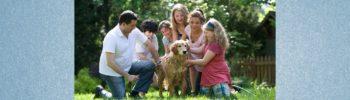 Hund auf Ende des Homeoffice und Sommerferien vorbereiten