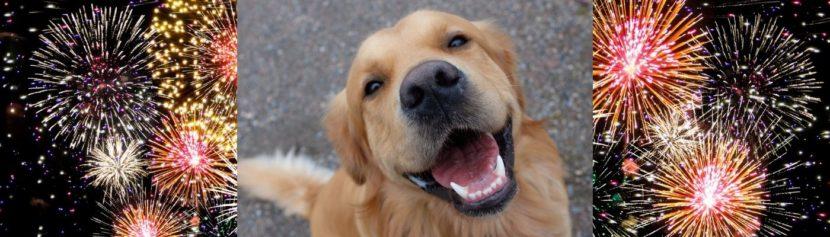 Lernpfote e.V. Blogbeitrag: 10 Tipps für ein stressfreies Silvester bei deinem Hund