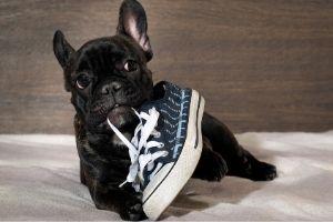 Lernpfote e. V. Blogbeitrag: Alleinbleiben beim Hund