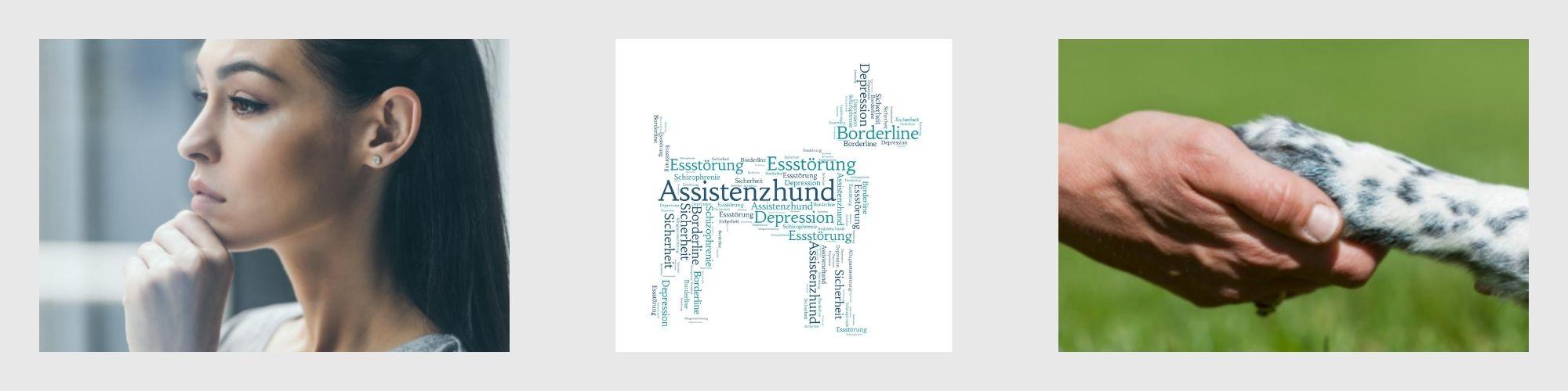 Ausbildung zum Assistenzhund bei psychischen Erkrankungen Lernpfote e. V.