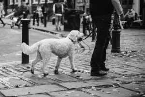 Lernpfote; Umgangsformen auf Hundespaziergang.