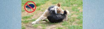 Lernpfote e. V. Blogbeitrag: Flöhe beim Hund - erkennen und bekämpfen