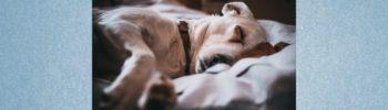 Schlafbedürfnis von Hunden - alle Fakten!