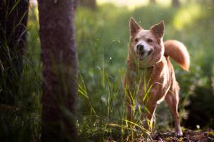 Lernpfote; Umgangsformen Hundespaziergang.