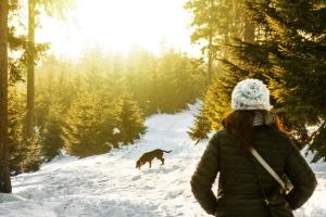 Keine langen Spaziergänge bei Blasenentzündungen beim Hund