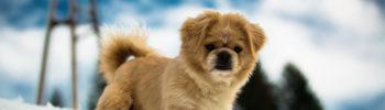 Achtung Bodenfrost - gefährlich für kleine Hunde