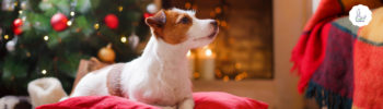Lernpfote e.V.: 10 Tipps für ein entspanntes Weihnachten mit Hund