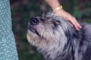 Lernpfote; Glücklicher Hund