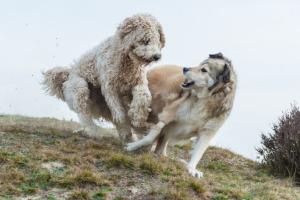 Lernpfote; Glücklicher Hund.