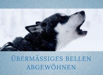 Lernpfote-Podcast Themen rund um den Hund Folge 014: Übermäßiges Bellen abgewöhnen