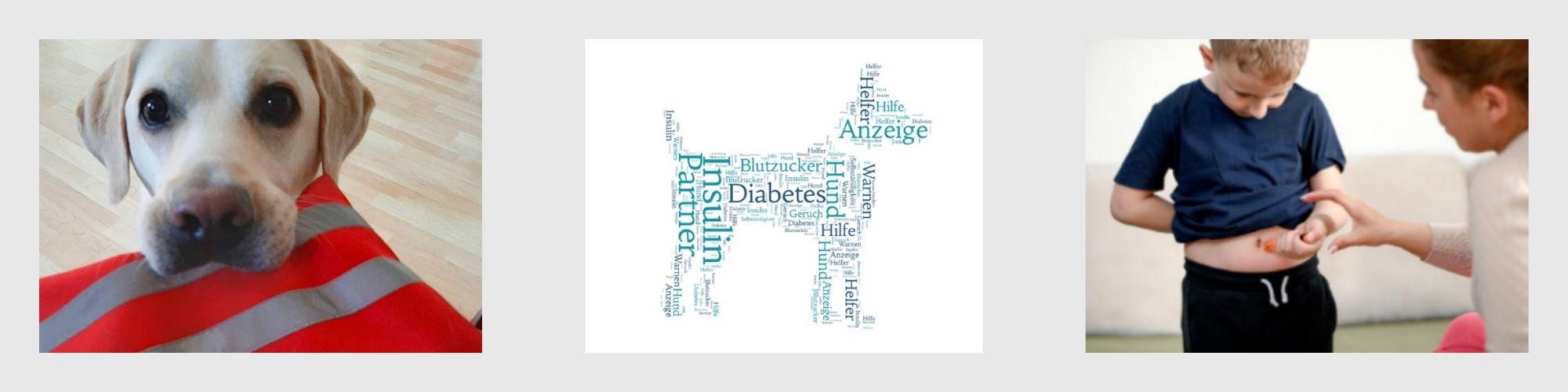 Lernpfote e. V. Ausbildung zum Diabetikerwarnhund