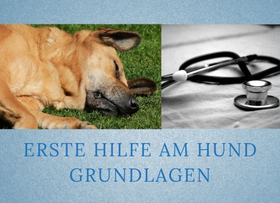 Lernpfote-Podcast Themen rund um den hund Folge 016: Erste-Hilfe am Hund - Grundlagen