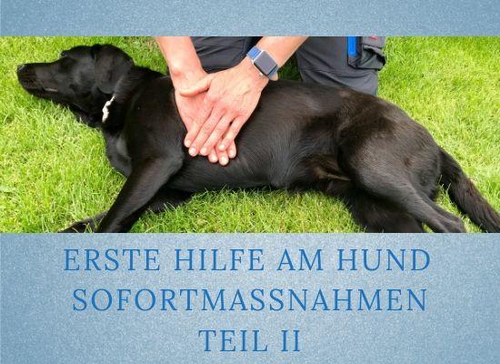 Lernpfote-Podcast: Erste Hilfe am Hund Sofortmaßnahmen Teil II