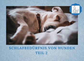 Schlafbedürfnis von Hunden Teil 2