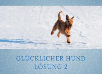 Lernpfote-Podcast Folge 003: Glücklicher Hund - Lösung 2