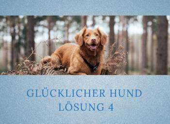 Lernpfote-Podcast: Folge 005 Glücklicher Hund - Lösung 4