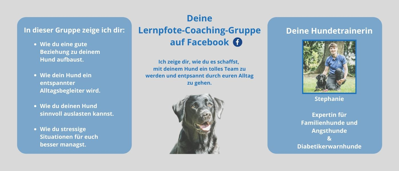 Lernpfote-Coaching-Gruppe auf Facebook