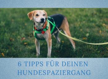 Lernpfote-Podcast Themen rund um den Hund Folge 011: 6 Tipps zu deinem Hundespaziergang