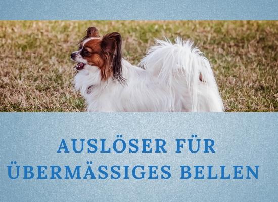 Lernpfote-Podcast: Themen rund um den Hund Folge 013: Auslöser für übermäßiges Bellen