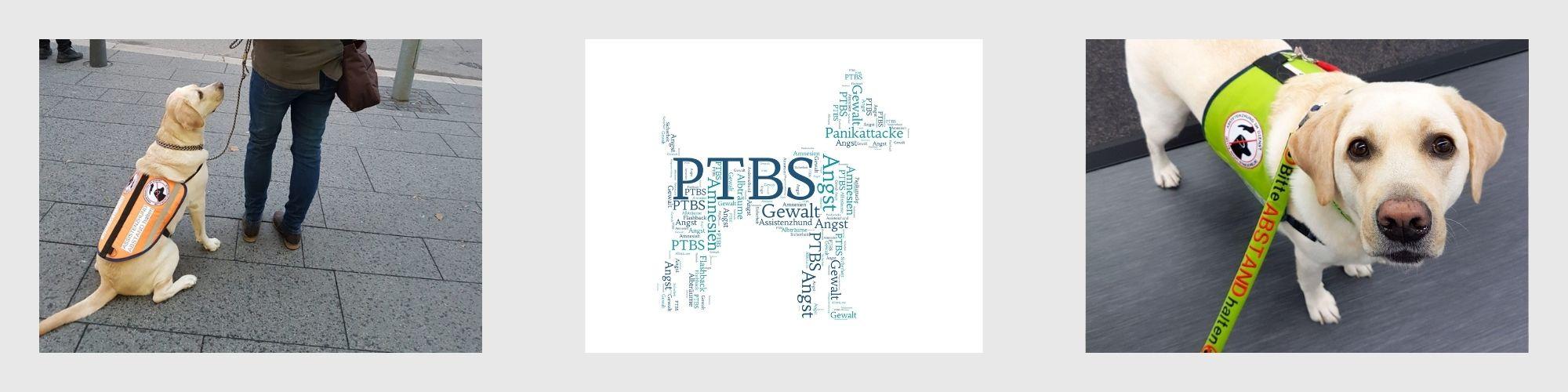 Ausbildung zum PTBS-Assistenzhund  Lernpfote e. V.