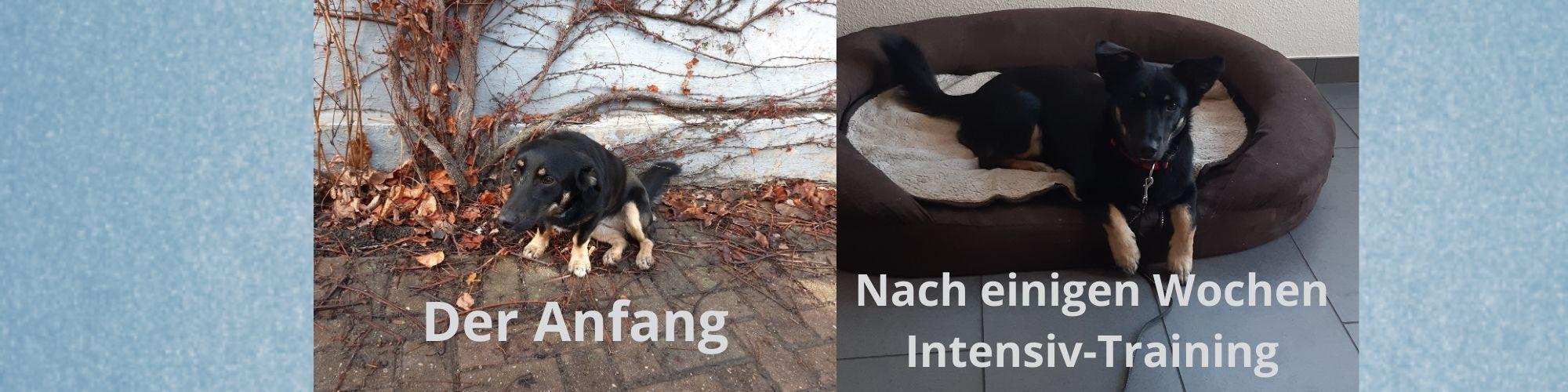 Testimonial Silke und Dieter mit Nelly
