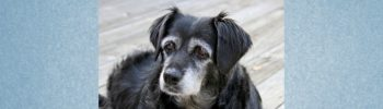 Lernpfote e. V. Blogbeitrag: Demenz beim Hund