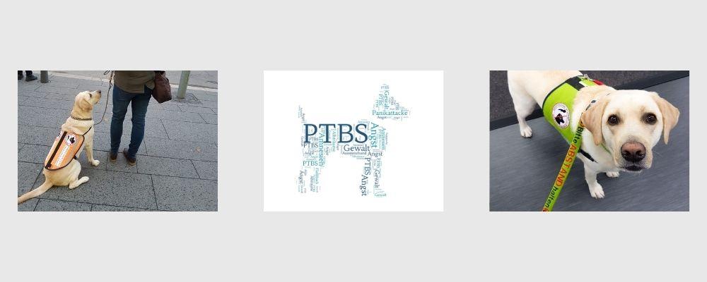 Ausbildung zum PTBS-Assistenzhund Lernpfote e.V.