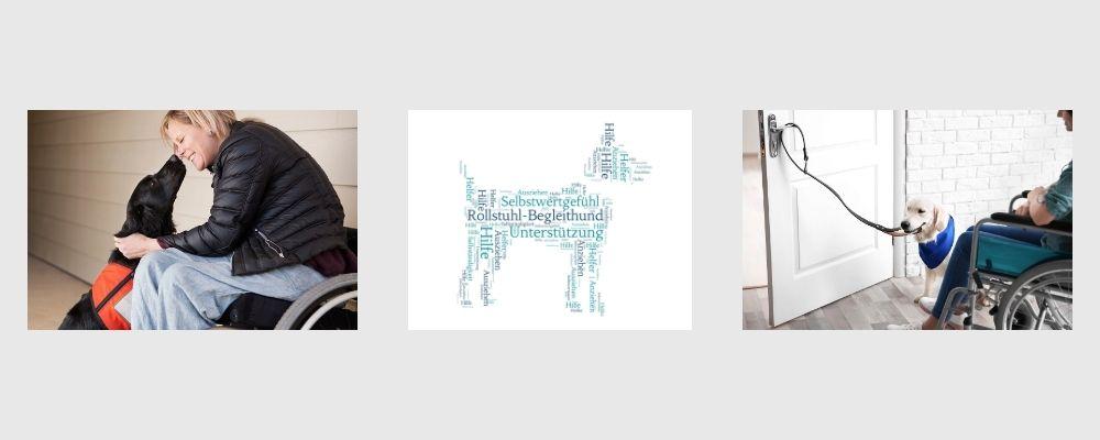 Ausbildung zum Rollstuhlbegleithund Lernpfote e.V.