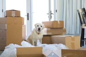 Lernpfote e. V. - Blogbeitrag: Umzug mit Hund