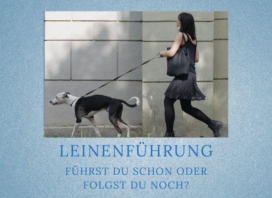 Podcast-Folge 044: Leinenführung beim Hund