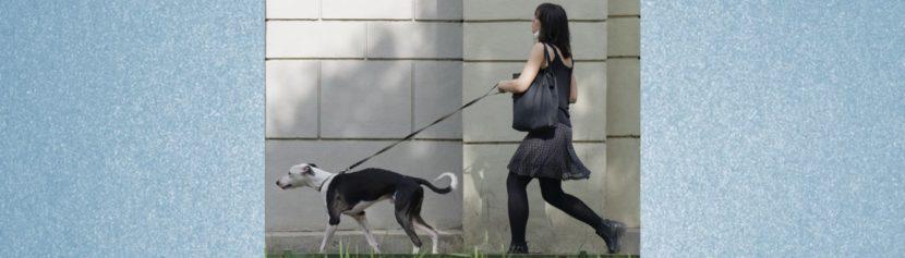 Leinenführung beim Hund